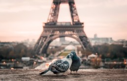 Paris Bird